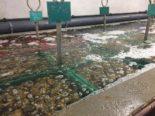 oxygénation venturi bassin eau mer
